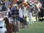 Best in Group Sydney Royal 2007