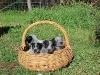 Basket of Babies